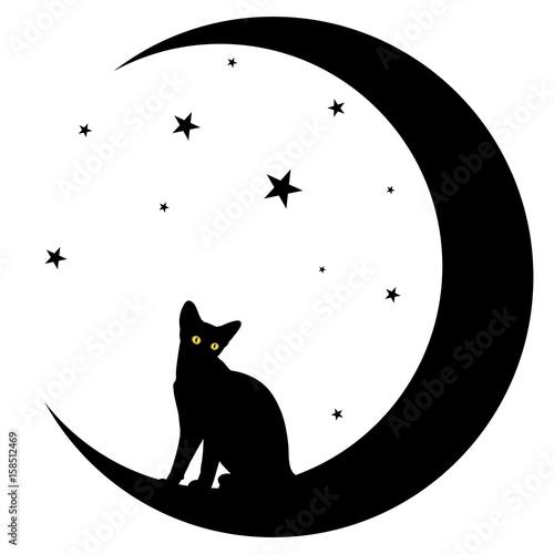 Kot z księżycem.
