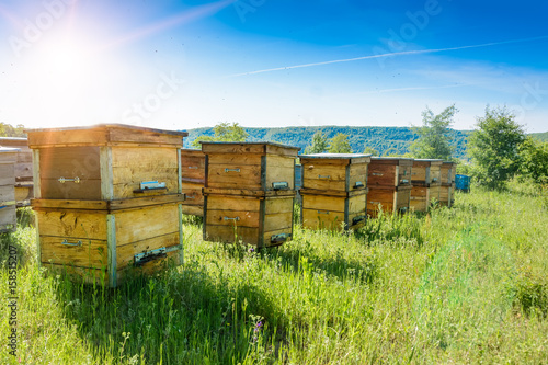 Poster Bee Hives in an apiary with bees flying to the landing boards. Apiculture.