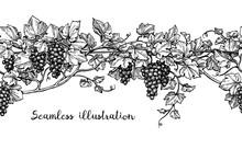 Seamless Grapevine Sketch
