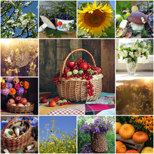Collage Of Summer Pictures. Flowers, Fruits And Vegetables.