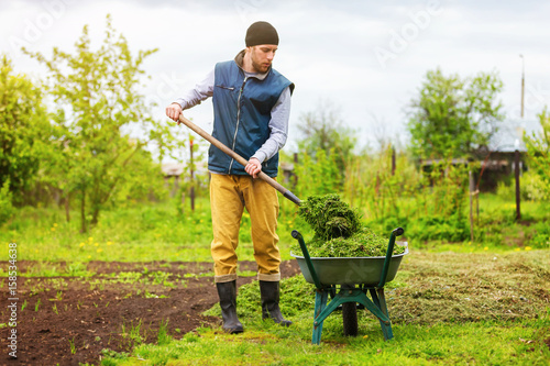 Male gardener is filling wheelbarrow with green grass using shovel at spring garden background Fototapeta