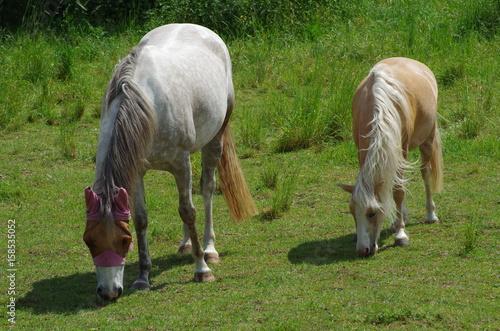 Fotografía  Grazing horses