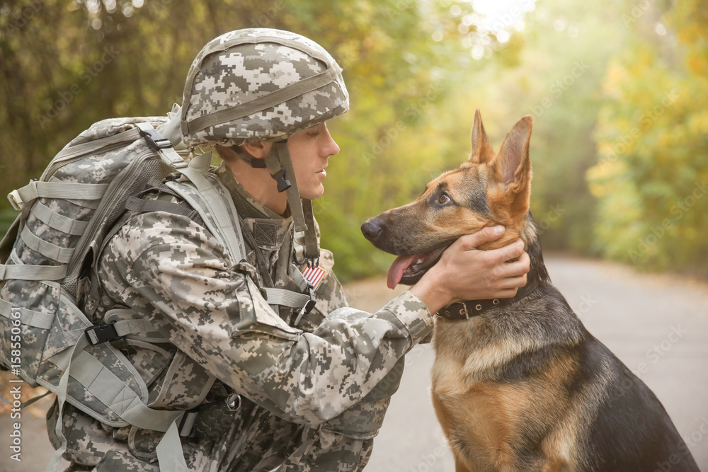 Fotografie, Obraz Soldier with military working dog on blurred background