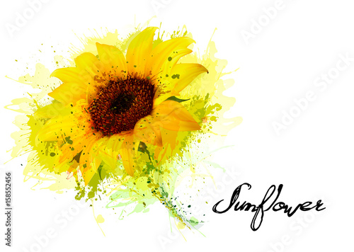 Fotografie, Obraz  Nature background with yellow sunflower. Vector