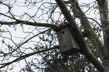 Wooden Box For Birds On The Tree.