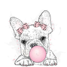 Cute French Bulldog With Gum. A Beautiful Dog Puffs Out A Ball Of Gum. Purebred Puppy. Vector Illustration For A Postcard Or A Poster, Print For Clothes.