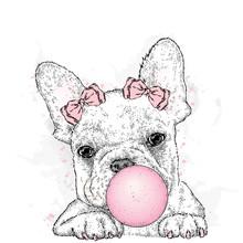 Cute French Bulldog With Gum. ...