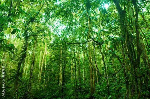 Niesamowity tropikalny zielony las