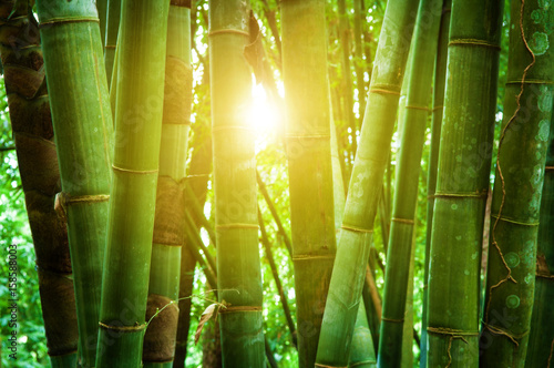 Foto op Canvas Bamboo Asian bamboo forest and sunlight
