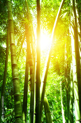 Poster Bambou Asian bamboo forest and sun flare