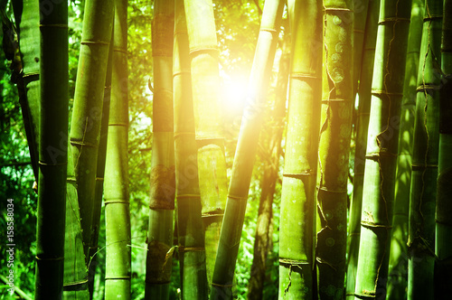 Foto op Canvas Bamboo Asian bamboo forest with sunlight