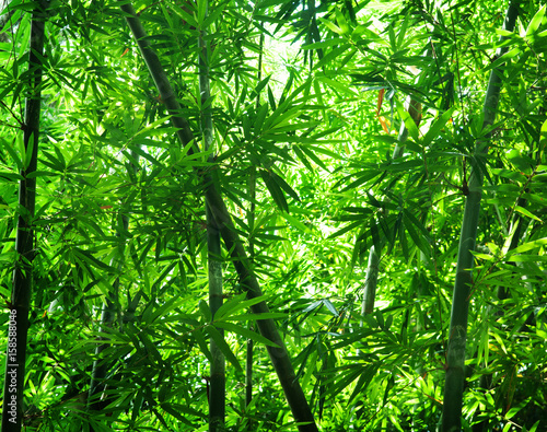 Poster Bamboe Asian bamboo forest view