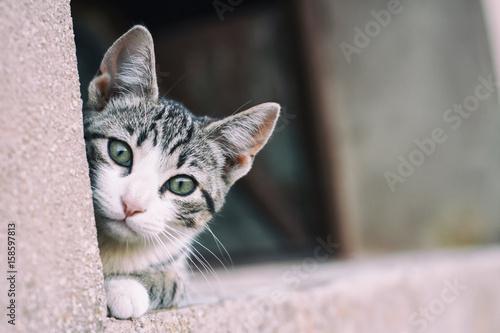 Obraz na plátně Cachorro de gato atigrado callejero