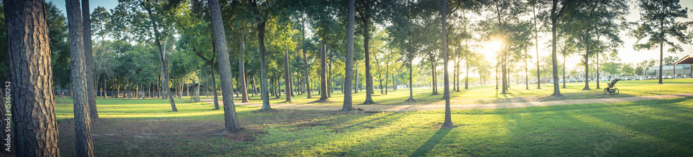 Fototapeta Panorama view an urban park in Texas, America with green grass lawn, huge pine trees and walking/running trail during sunset. Composition of nature in panoramic. Park parking lot is in the distance.