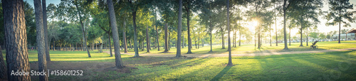 Fotografiet Panorama view an urban park in Texas, America with green grass lawn, huge pine trees and walking/running trail during sunset