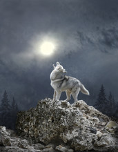 A Blizzard And A Wolf Sing A S...