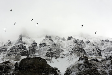 Panel Szklany Góry Birds Flying past Arctic Mountains Covered in Mist. Spitsbergen, Svalbard, Norway