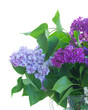 Fresh lilac violet and blue flowers with green leaves close up isolated on white background