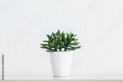 In de dag Planten Artificial succulent plant