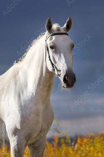 Photo  White horse portrait against dark blue sky