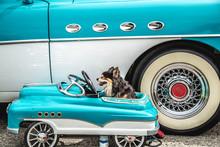 Dog MIni Car