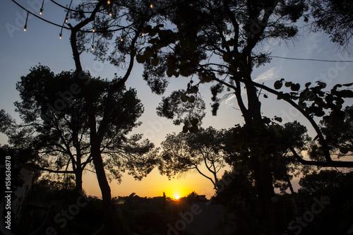 Fotografia  Puesta de sol detrás de los arboles