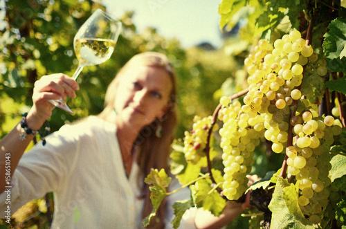 Fotografia  Ripe grapes. Lavaux, Switzerland