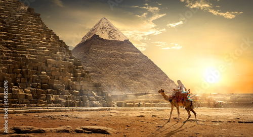 Photo sur Aluminium Chameau Nomad near pyramids