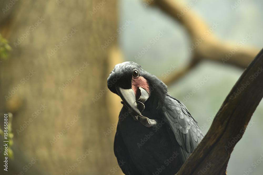 tropische Vögel in Tierpark Foto, Poster, Wandbilder bei EuroPosters