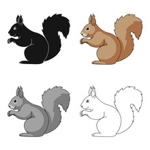 Squirrel.Animals Single Icon I...