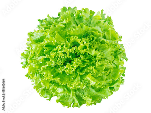 Green batavia lettuce salad head