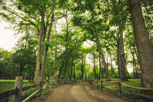 Road And Fences In The Park. W...