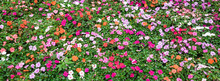 Top View A Colorful Flowerbed ...
