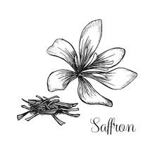 Hand Drawn Ink Illustration Of Saffron