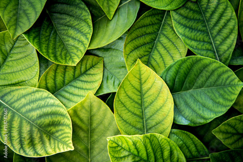 the  Fresh tropical Green leaves background Fotobehang