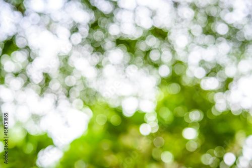 Abstract Nature Background With Blurry Bokeh Defocused Lights Buy
