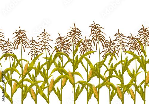 Fotografia  Corn maize vector seamless horizontal border pattern