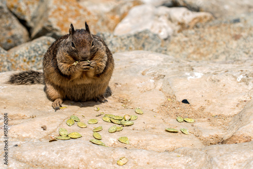 Photographie  well feed chipmunk