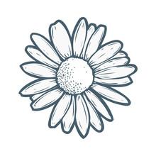 Chamomile, Camomile Flower Flo...