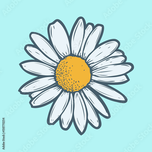 Photo Chamomile, camomile flower floral hand drawn engraving vector illustration