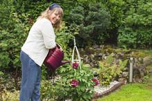 Freundliche Frau Giesst Pfingstrosen Im Garten