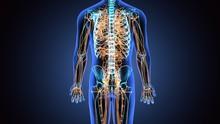 3d Illustration Of Human Body ...