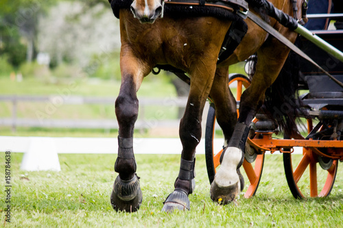 Close up of horse pulling carriage in the field