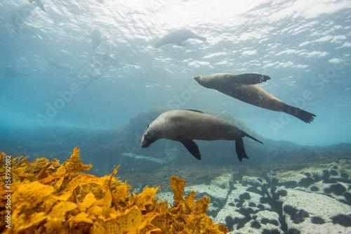 Plakat uszczelnia podwodną wyspę Montague w Australii