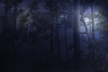 Full Moon Rises Over A Forest ...