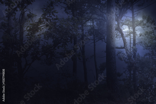Fototapeten Wald Full moon rises over a forest on a misty night