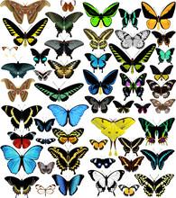 Big Vector Set Of Butterflies Of World