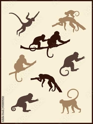 Valokuva  Monkey Silhouettes
