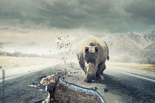 Poster de jardin Rhino Rhino on asphalt road