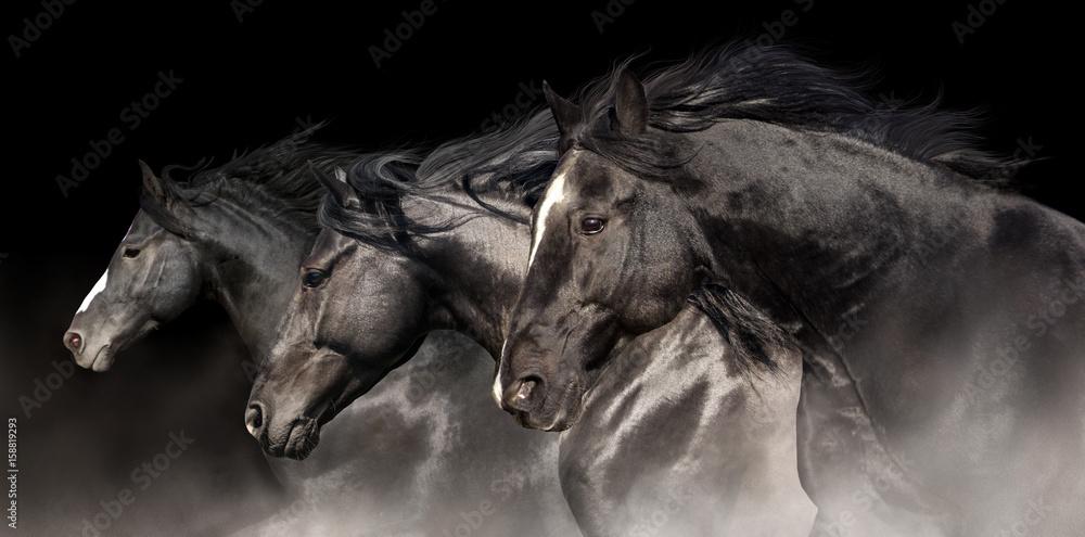 Fototapety, obrazy: Black stallions with long mane run on dark background